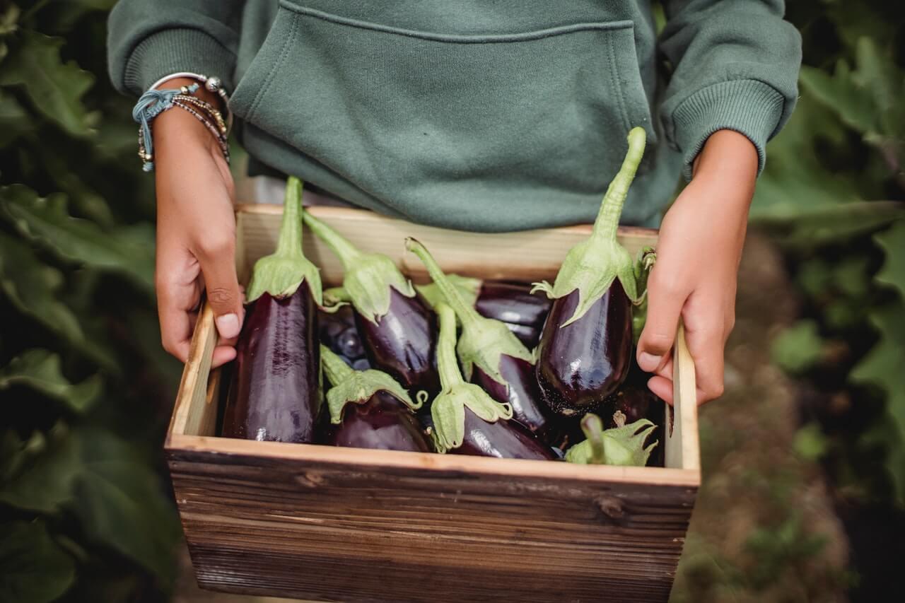 growing vegetables in kitchen garden
